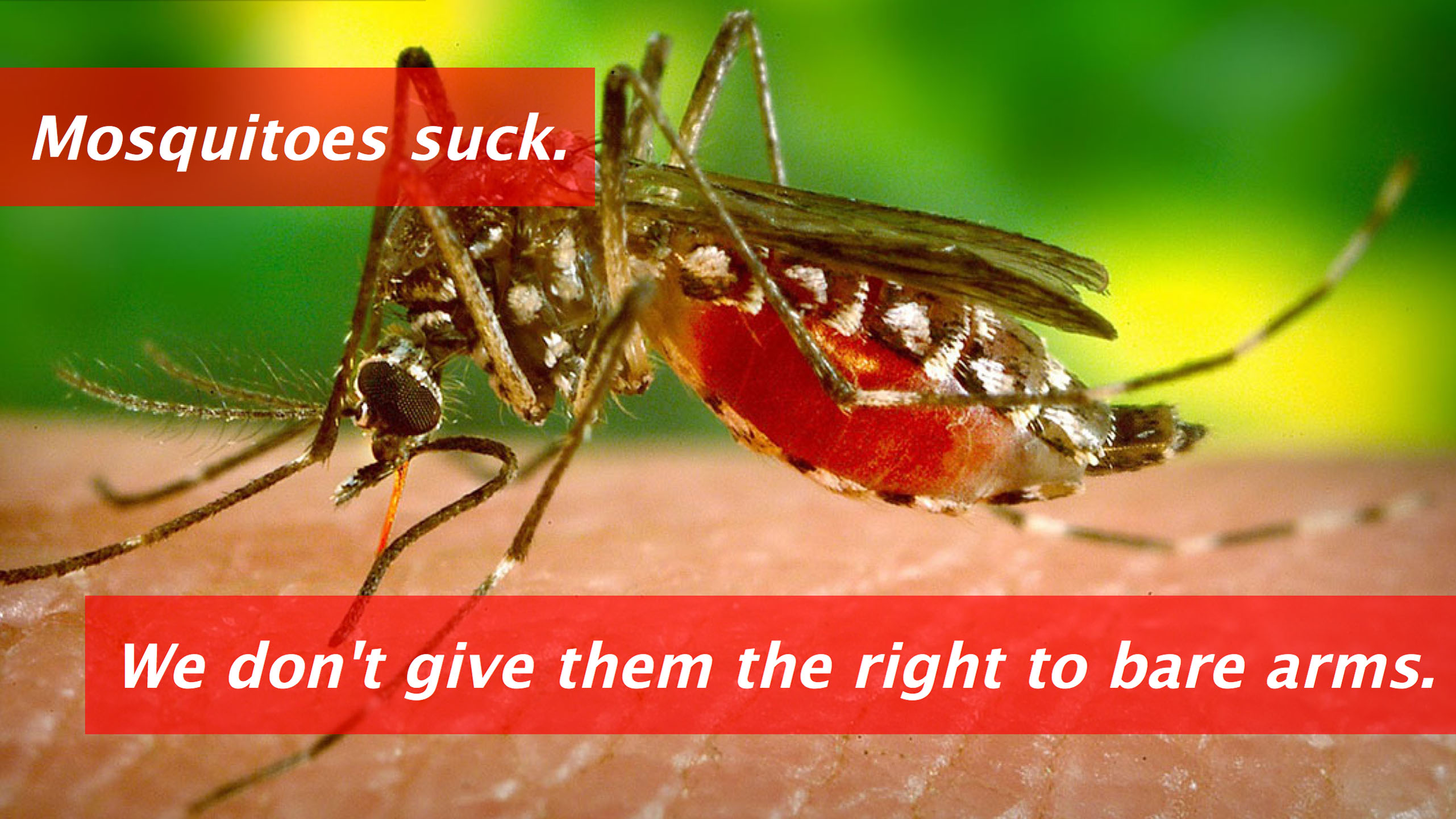 mosquito-slider-still