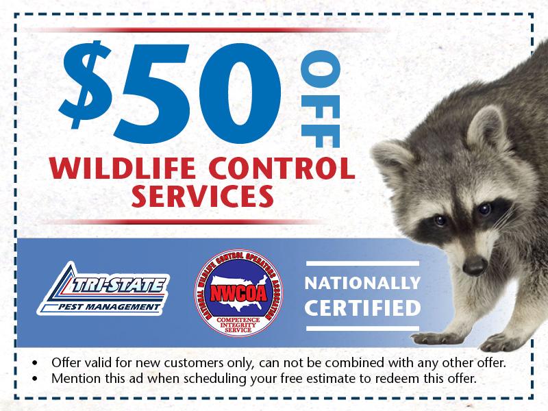 Tristate Pest Website Offers10