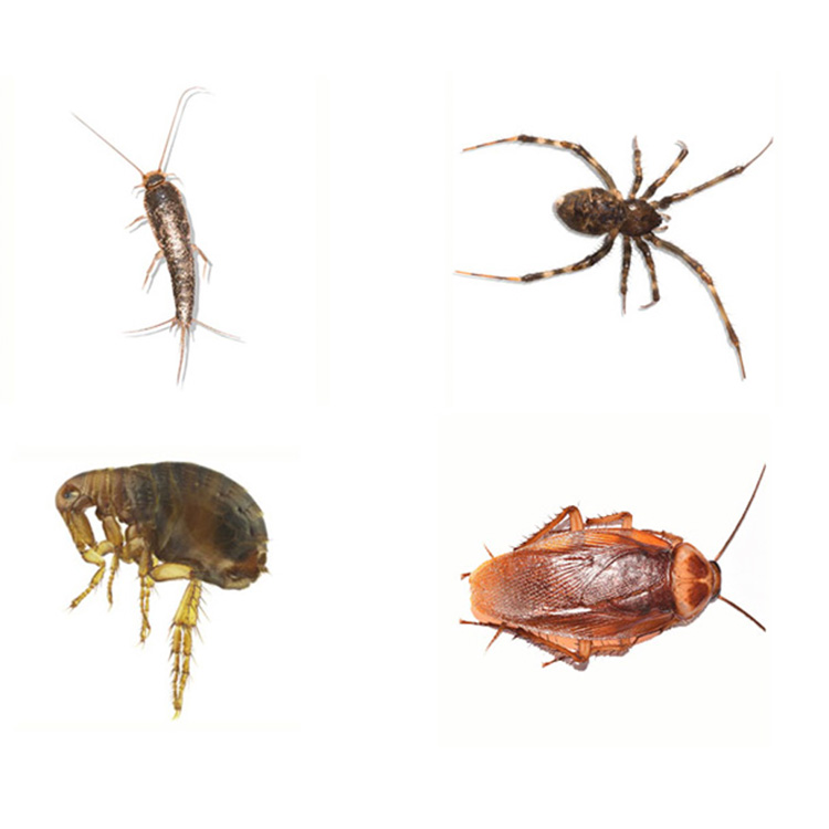 Tristate pest images of a silverfish, spider, tick, and cockroach.