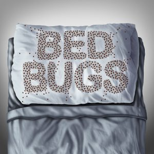 Tri-State Pest Bed Bug blog image. Bed bugs on a bed spelling out the word bed bug